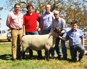 2015 Allendale / Days Whiteface Annual On-Property Sheep Sale