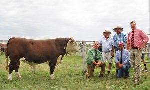 2016 Annual Allendale Poll Hereford Sale