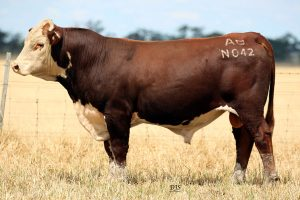 2019 Bull Sale Featured Lot Videos