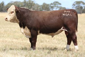 2019 Bull Sale Featured Lots