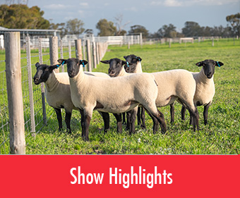 Suffolk Show Highlights
