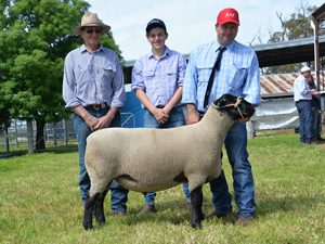 2016 Allendale / Days Whiteface On Property Sheep Sale