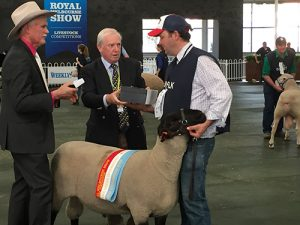 Gavin Wall, Chariman RASV Sheep Committee and Stephen Spargo, President RASV and the Interbreed Champion Ram - Lot 4 in Annual Sale.