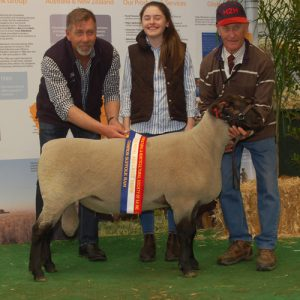 2015 Royal Adelaide Show Grand Champion Suffolk Ram