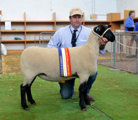 2016 Royal Adelaide Show Champion Suffolk Ewe Supreme Interbreed Shortwool Ewe