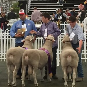 Winning CEVA Group of 3 Rams. Thanks Russ Davis.