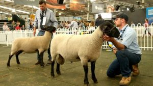 2017 Royal Melbourne Show Results