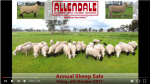 2017 Sheep Sale Preview