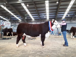 2017 Dubbo National Sale Results