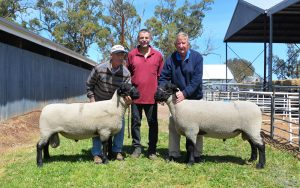 2017 Allendale / Days Whiteface On Property Sheep Sale Results