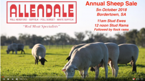 2018 Sheep Sale Preview