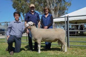 2018 Allendale Sheep Sale Summary