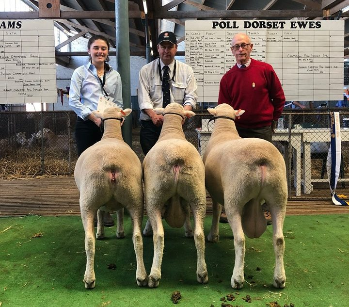 Poll Dorset Breeders Group