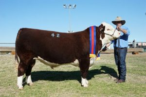 Dubbo National Sale Results 2018
