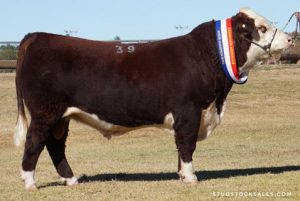Dubbo National Show & Sale Results 2019