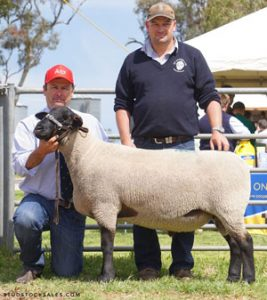 2019 Allendale Sheep Sale Results