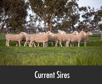 PD-current-sires