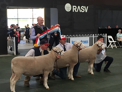 ben-white-rasv-agribusiness-manager-presenting-interbreed-breeders-group-harry-with-lot-18-and-gus-with-lot-17-in-annual-sale500