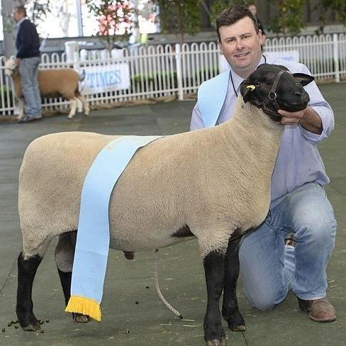 lot-26-annual-sale-supreme-champion-suffolk-melb-show-2014