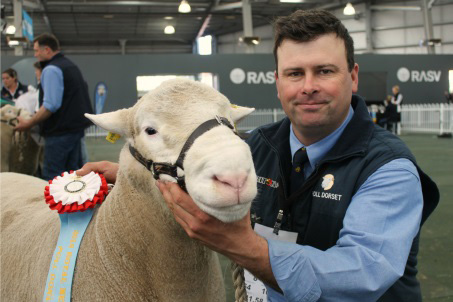 supreme-champion-poll-dorset-adelaide-and-melboune-royal-shows-2014