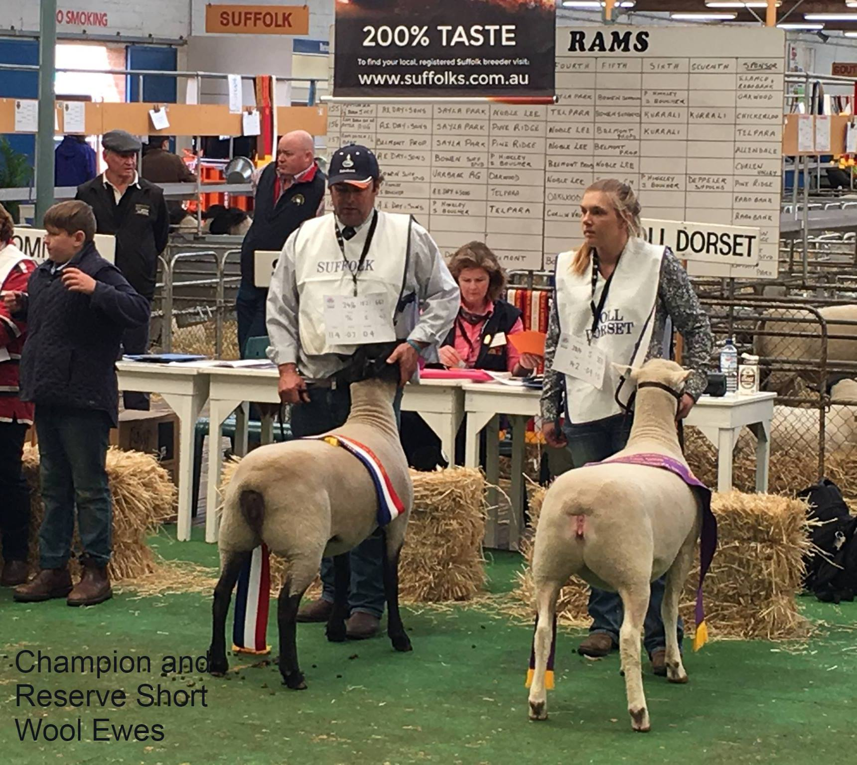 champ and res shortwool ewe