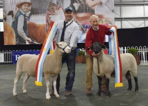 Allendale Secures Supreme Ewe & Ram at Melbourne Royal 2018