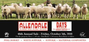 2018 Sheep Sale Catalogue Now Available