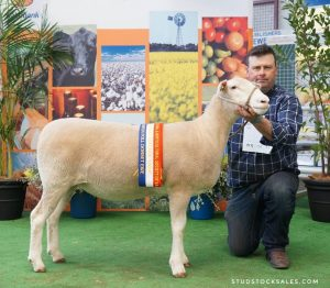 2018 Royal Adelaide Show Results