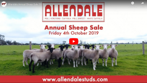 2019 Sheep Sale Preview
