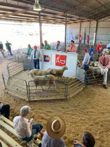 2020 Allendale Sheep Sale Results