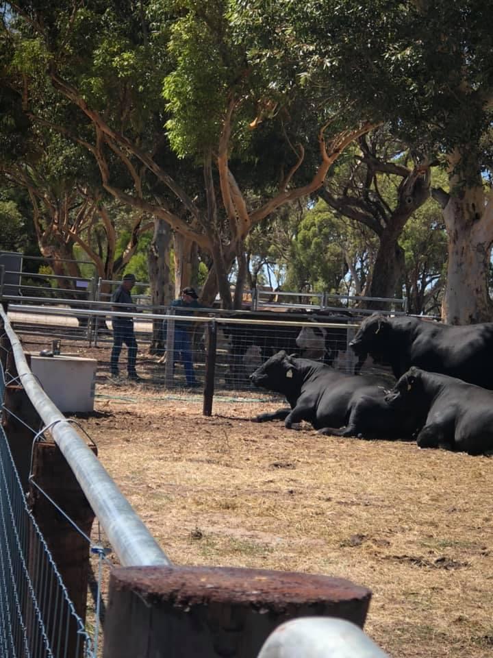 2021 Beef Week - 5